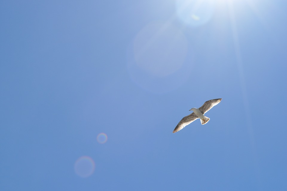 seagull-1611609_960_720